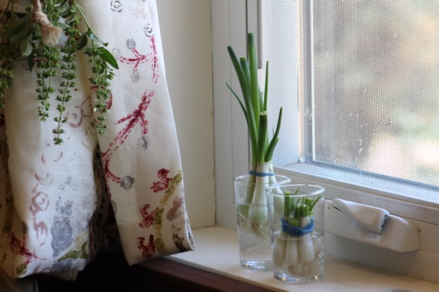 4 plants you can REGROW in your kitchen